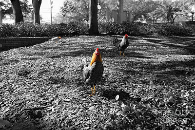 Art Print featuring the photograph Ybor Cocks by Blake Yeager