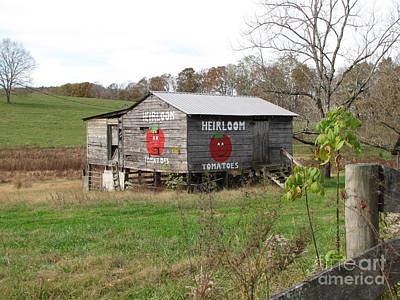 Photograph - Ye Olde Tomato Barn by Marilyn Carlyle Greiner