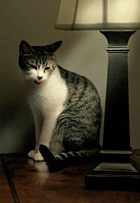 Gray Tabby Photograph - Year Of The Cat by Diana Angstadt