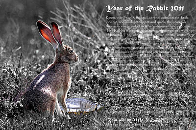 Year Of The Rabbit 2011 . Bw Art Print by Wingsdomain Art and Photography