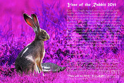 Year Of The Rabbit 2011 . Magenta Print by Wingsdomain Art and Photography