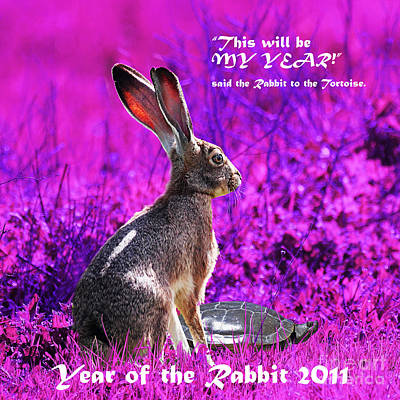 Year Of The Rabbit 2011 . Square Magenta Art Print by Wingsdomain Art and Photography