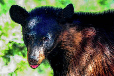 Photograph - Yearling Black Bear by Marilyn Burton