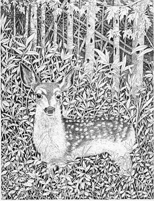 Drawing - Yearling by Lawrence Tripoli
