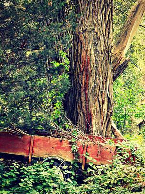 Photograph - Yelling At The Yard by Cyryn Fyrcyd