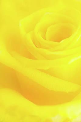 Photograph - Yello Rose by Andy Myatt
