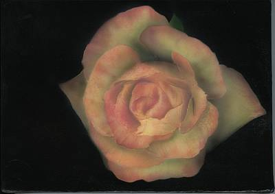 Painting - Yello Rose by Charles Parks