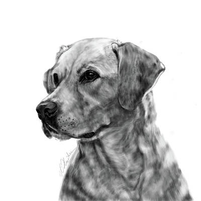 Labrador Digital Art - Yellow Labrador by Victoria Newton
