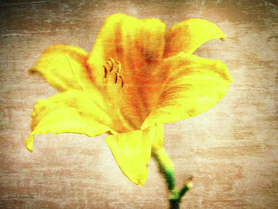 Photograph - Yellow  ... by Chuck Caramella