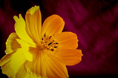 Photograph - Yellow-1 by Fabio Giannini