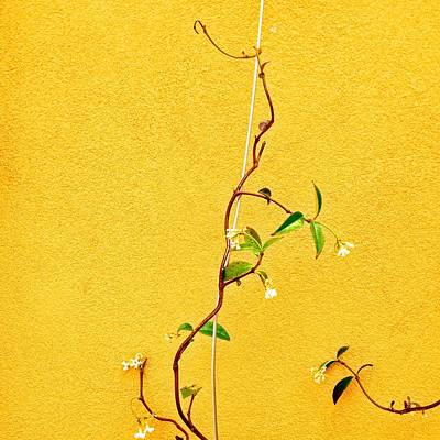 Photograph - Yellow #1 by Julie Gebhardt