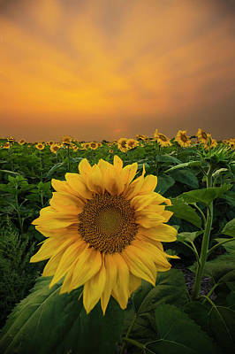 Photograph - Yellow by Aaron J Groen