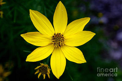 Photograph - Yellow by LR Photography