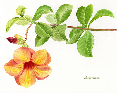 Vine Painting - Yellow Allamanda Trumpetvine  by Sharon Freeman