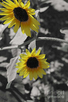 Day Photograph - Yellow And Black by Gloria Pasko