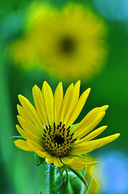 Yellow And Green 3 Art Print by Peter  McIntosh