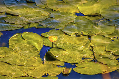 Photograph - Yellow And Green #g4 by Leif Sohlman