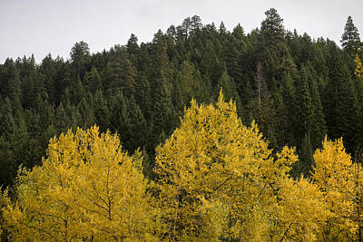 Photograph - Yellow And Green by Robert Potts