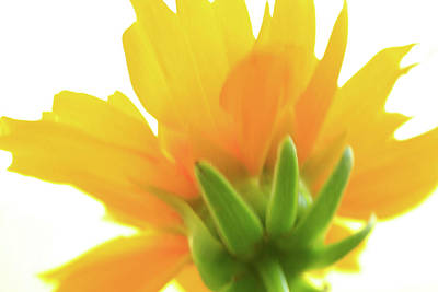 Art Print featuring the photograph Yellow And Green by Roger Mullenhour