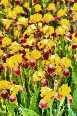 Digital Art - Yellow And Maroon Irises - Painted by Gene Healy
