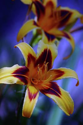 Yellow And Orange And Garnet Daylilies 1270 H_2 Art Print