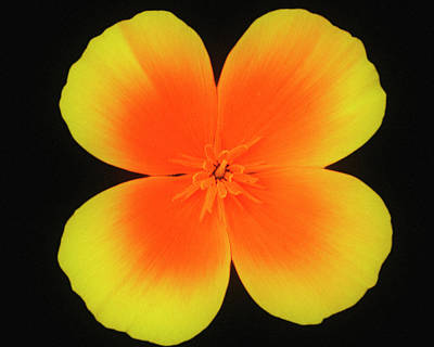 Photograph - Yellow And Orange by Cliff Norton