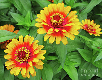 Photograph - Yellow And Orange Flowers by Randall Weidner