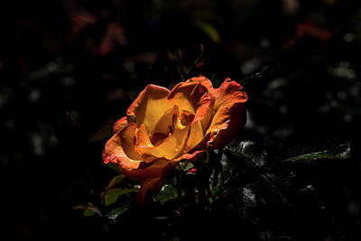 Photograph - Yellow And Orange by Jay Stockhaus