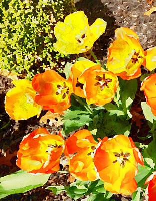 Mixed Media - Yellow And Orange Tulips Watercolor by Femina Photo Art By Maggie