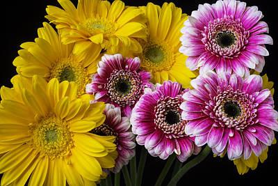 Gerbera Photograph - Yellow And Pink Gerbera Daisies by Garry Gay