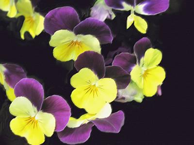 Photograph - Yellow And Purple by Ian  MacDonald