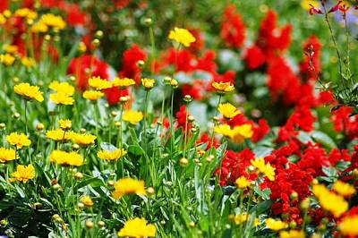 Photograph - Yellow And Red Flowers Garden View by Matt Harang