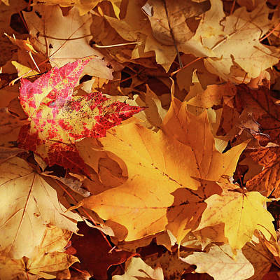 Photograph - Yellow And Red Forest Floor by Mary Bedy
