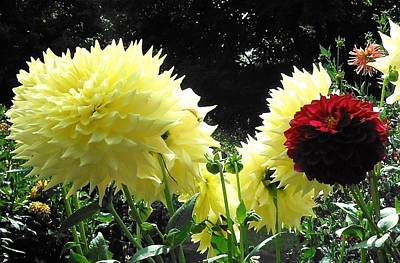 Photograph - Canary Dahlias Have It by Suzanne McDonald