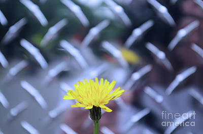 Photograph - Yellow And Silver by John S