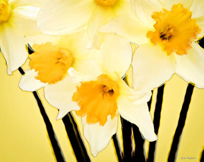 Yellow And White Daffodils. Art Print