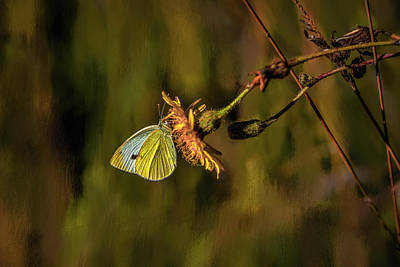 Photograph - Yellow And White #h8 by Leif Sohlman