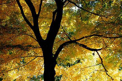 Lake Waramaug Photograph - Yellow by Andrea Simon