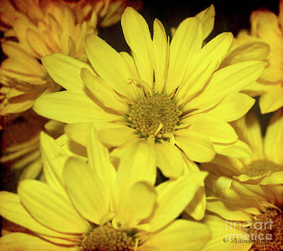 Photograph - Yellow Art by Milena Ilieva