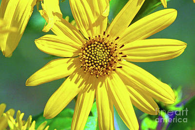 Photograph - Yellow by Inspirational Photo Creations Audrey Taylor