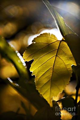 Yellow Autumn Leaf Art Print