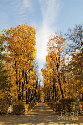 Giuseppe Cristiano - Yellow autumn trees in park alley  by Arletta Cwalina