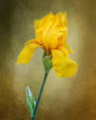 Photograph - Yellow Bearded Iris by TnBackroadsPhotos