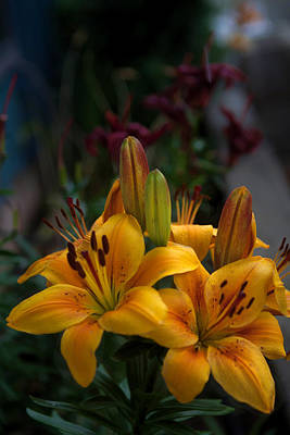 Photograph - Yellow Beauties by Cherie Duran