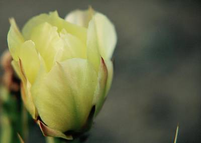 Photograph - Yellow Beauty by Amee Cave