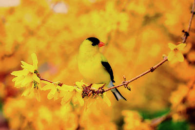 Photograph - Yellow Beauty by Jill Wellington