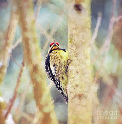 Photograph - Yellow-bellied Sapsucker - Digital Painting by Kerri Farley