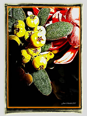 Art Print featuring the photograph Yellow Berries by Joan  Minchak