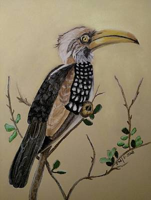 Pastel - Yellow Billed Hornbill by Joan Mansson