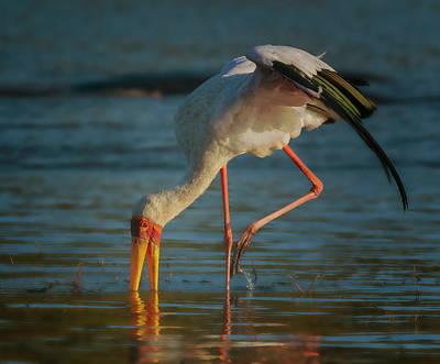 Photograph - Yellow-billed Stork  by Myer Bornstein